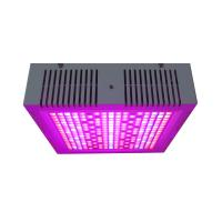 Best Osunby 600W Cannabis LED Grow Light Full Spectrum for Indoor Greenhouse Plants Veg Bloom Flowering wholesale