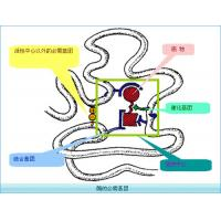China Recombinant human Chymotrypsin Enzyme for Enzymatic Hydrolysis of Protein for sale