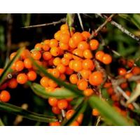 Buy cheap food grade sea buckthorn berry extract powder,100% natural seabuckthorn berry from wholesalers