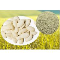 Wholesale Off - White Fine Plant Protein Powder Pumpkin Seed Protein Powder from china suppliers