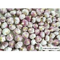 China Healthy Fresh Organic Garlic , Natural Garlic Liliaceous Vegetable Type on sale