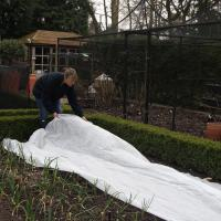 Buy cheap 10M x 3.2M Frost & Insect Protection Sheet Roll Garden Plants Crop Fleece from wholesalers