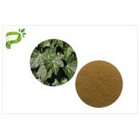 Wholesale Hedera Helix Hederacoside Plant Extract Powder Ivy Leaf Extract Treat Cough And Cold from china suppliers