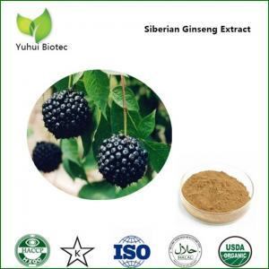 Wholesale acanthopanax senticosus extract powder,eleutherosides e,eleutheroside 0.8% from china suppliers