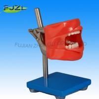 Wholesale Simple Dental Phantom 3 Head Fit for Nissin Typodont from china suppliers