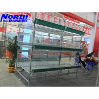 H Type Auto Feeding System, Layer Cages, Poultry Equipments and Poultry Cages