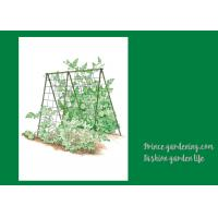 Wholesale Cucumbers Garden Plant Trellis / Vegetable Garden Trellis Saves Space from china suppliers
