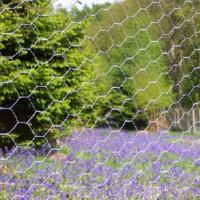 Wholesale Chicken Mesh Netting from china suppliers