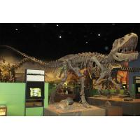 China Golden Plated Complete Dinosaur Fossil Dino Skeleton For Amusement Park for sale