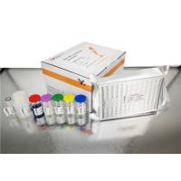 Wholesale Sandwich Type Custom Human Cys C ELISA Kit with 2 Hours Assay Time from china suppliers