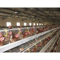 Wholesale Automatic poultry farm from china suppliers
