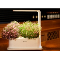 Wholesale 3pcs Plant PP Home Hydroponic Growing Systems With Led Light from china suppliers