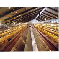 Wholesale High quality poultry feeder for for broiler and breeder from china suppliers