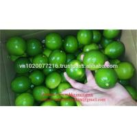 Wholesale Sell lemon seedless, good price/ fresh lime/ fresh lemon/ lime cheap from china suppliers
