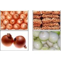 Wholesale Fresh Yellow Onion from china suppliers