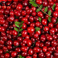 Wholesale Anti Aging Organic Food Ingredients Freeze Dried Cranberry Powder Prevents Scurvy from china suppliers