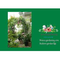 Wholesale Steel Garden Plant Trellis / Garden Arch Trellis Support 140 X 240cm from china suppliers