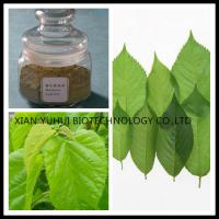 Buy cheap Mulberry Leaf powder,folium mori extract, 1-DNJ price, Mulberry leaf extract from wholesalers