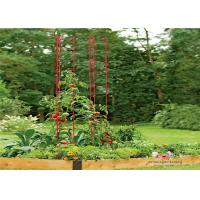 Wholesale Durable Garden Metal Tomato Cages from china suppliers