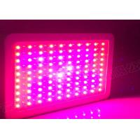 Wholesale Convenient Vegetables LED COB Grow Lights , 1000W LED Flowering Grow Lights from china suppliers