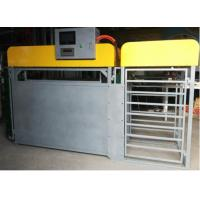 Buy cheap Sheep Automatic Weighing Sub Group Management System Steel Material from wholesalers