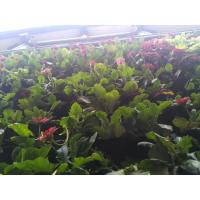 Wholesale Vertical Garden PE Fabric Reusable Hanging Flower Baskets For Vegetable / Flowers from china suppliers