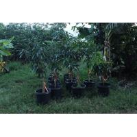 Best Sturdy and economical grower pots wholesale