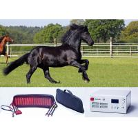 Wholesale Laser belt Veterinary Laser Machine Animal pain relief With continuous Mode from china suppliers