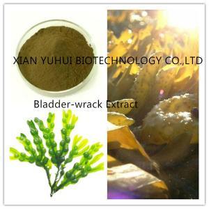 Wholesale bladder-wrack extract, bladder wrack extract,wrack extract, wrack powder from china suppliers