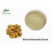 Wholesale Medcine Ingredients Giant Knotweed Extract with 90% Polydatin White Powder from china suppliers