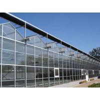 Best Glass Greenhouse, Venlo structure wholesale