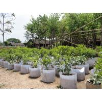 Wholesale Fashionable Design  Plant Grow Bags 0.1 - 3.5mm Thickness Optional Color from china suppliers