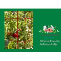 Wholesale Powder Coated Steel Support For Tomato Plants from china suppliers