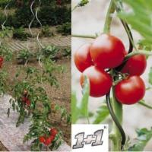 Best Galvanized Tomato Support Spiral Wire wholesale