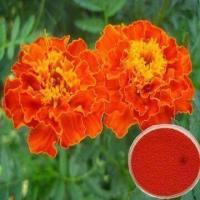 China Marigold Flower Extract with 5 to 80% Lutein, Used as Food Coloring Agent on sale