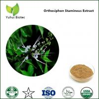 Wholesale Orthosiphon Stamineus P.E.,Java Tea extract,Clerodendranthus spicatus extract from china suppliers