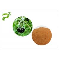 Wholesale High Purity Plant Extract Powder Siberian Ginseng Eleutherococcus Eleutheroside B / E from china suppliers