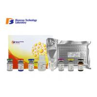 Quality High Sensitive CNKSR1 ELISA Kit Connector Enhancer Of Kinase Suppressor Of Ras 1 for sale