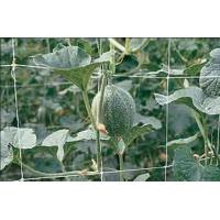Wholesale Climbing Plant Support Netting Green / White For Greenhouse , Garden from china suppliers