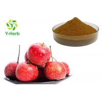 China Fructus Crataegi Leaf P.E. Hawthorn Berry Extract Flavones Powder Vitexin on sale