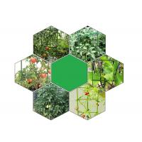 Wholesale Green Tomato Plant Stakes / Tomato Plant Cage PE Coated Steel from china suppliers