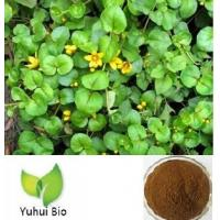 Wholesale Lysimachia christinae Hance extract,Christina Loosestrife Herb extract from china suppliers