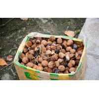 China Horse Chestnut Extract/ISO9001,Kosher,Organic certificated on sale