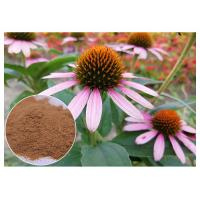 Wholesale Anti-microbial anti-oxidation Echinacea pururea herb extract powder from china suppliers