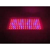 China Cree 1000 watt Hydroponic LED Grow Lights 60 / 90 degree high efficient for Horticulture on sale