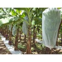 Wholesale PP spunbond non woven farm cover fabric/Banana grow bag with 17gsm pp non-woven fabric/plant cover fruit bags from china suppliers