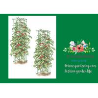 Wholesale Heavy Duty Metal Tomato Cages from china suppliers