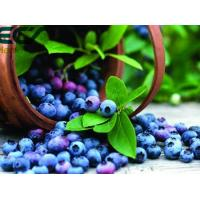Wholesale Blueberry powder; Oraganic Food Ingredients; Beauty effect, prevent cancer; antioxidant; Freeze- Dried; eyes care from china suppliers