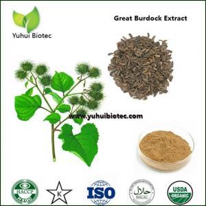 Wholesale arctium lappa p.e,Burdock Seed Extract,burdock extract,burdock root extract from china suppliers