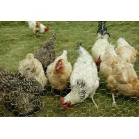 Wholesale Chicken Mesh Hexagonal Wire Nettng from china suppliers